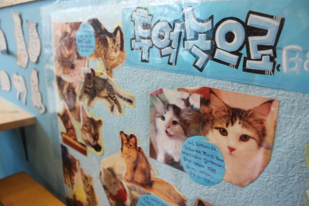 Fun facts about the cats.